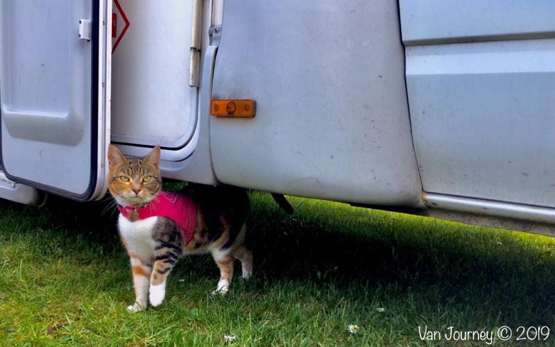 Life With A Van Cat
